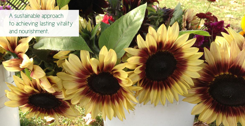 Home-Sunflower